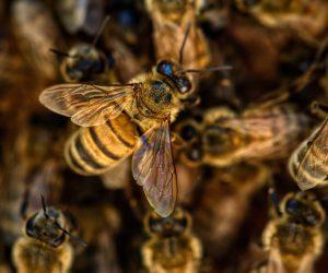 bees-g171787b0d_1920