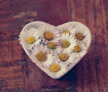 daisy-gf0a8d9c15_1920